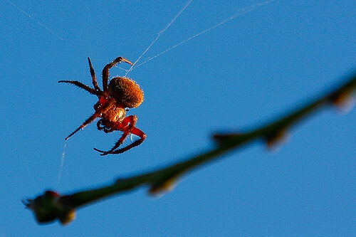 Close up image of a spider on a web